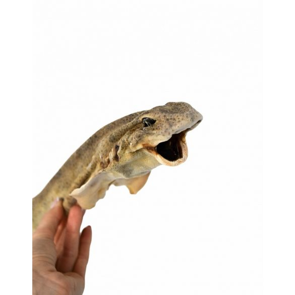 Egész cápa rágóka kutyáknak